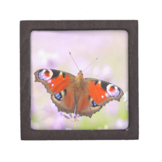 peacock butterfly over lavender jewelry box