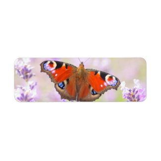 peacock butterfly over lavender label