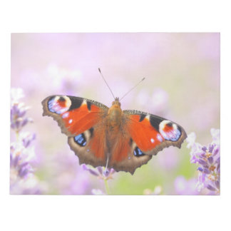 peacock butterfly over lavender notepad