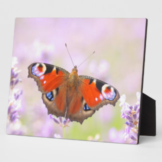 peacock butterfly over lavender plaque