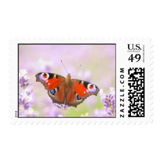 peacock butterfly over lavender stamp