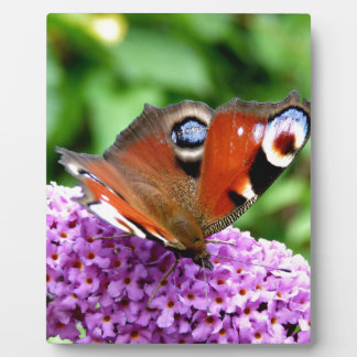 PEACOCK BUTTERFLY PLAQUES