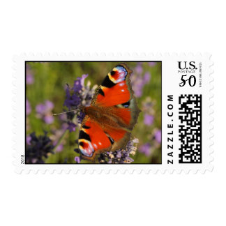 peacock butterfly postage