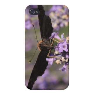 peacock butterfly sucking lavender nectar case for iPhone 4