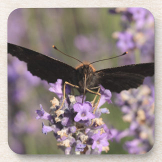 peacock butterfly sucking lavender nectar coaster