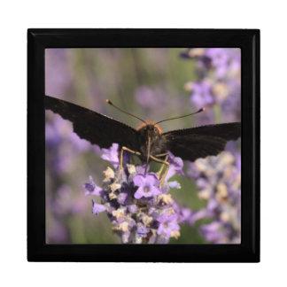 peacock butterfly sucking lavender nectar keepsake box