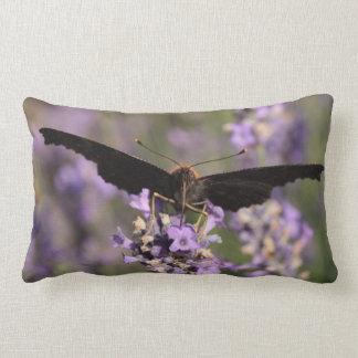 peacock butterfly sucking lavender nectar lumbar pillow