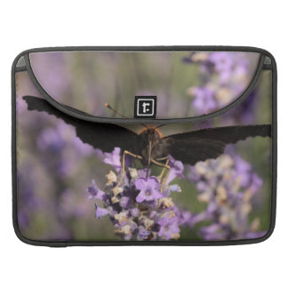peacock butterfly sucking lavender nectar MacBook pro sleeve