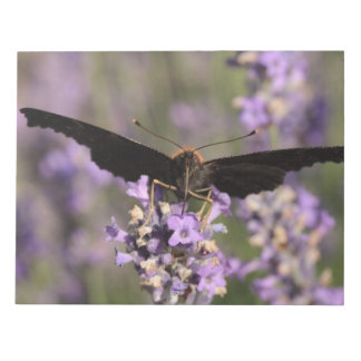 peacock butterfly sucking lavender nectar memo notepad