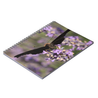 peacock butterfly sucking lavender nectar notebook