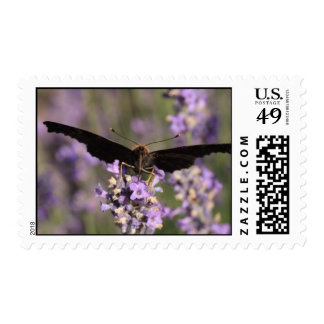 peacock butterfly sucking lavender nectar postage