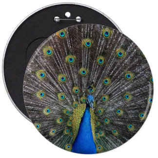 peacock 6 inch round button