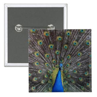 peacock 2 inch square button