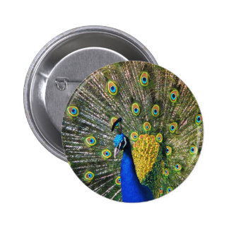 Peacock Buttons