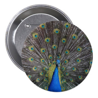 peacock 3 inch round button