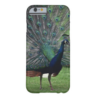 Peacock Barely There iPhone 6 Case