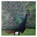 Peacock Ceramic Tile
