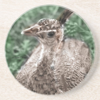 Peacock chick sitting in green grass looking up beverage coasters