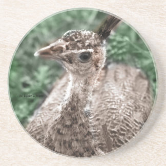 Peacock chick sitting in green grass looking up drink coasters