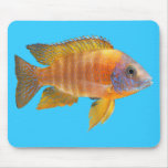 Peacock Cichlid Mouse Pad
