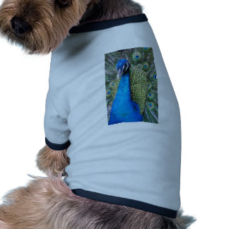 Peacock Close-up Pet Clothing