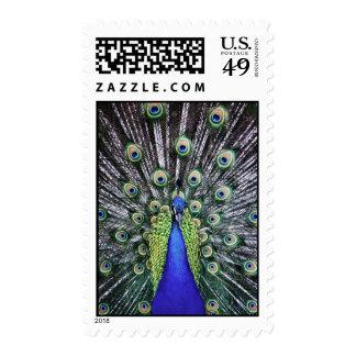 peacock closeup stamps