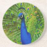 Peacock Coasters
