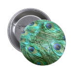 Peacock colours buttons