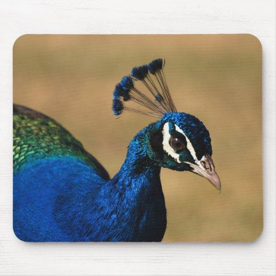 Peacock customizable mousemats & mousepad