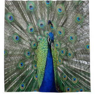Peacock  Dance Shower Curtain
