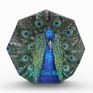 Peacock Daze. Acrylic Award