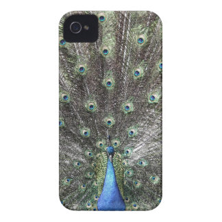 Peacock Design iPhone 4 Cover