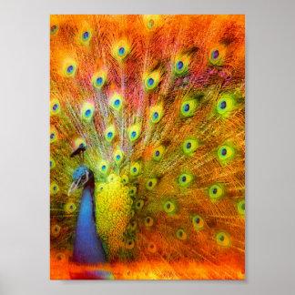Peacock Digital Art Poster