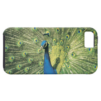 Peacock displaying iPhone SE/5/5s case