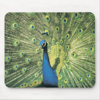 Peacock displaying mouse pad