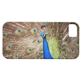 Peacock displaying plumage iPhone SE/5/5s case