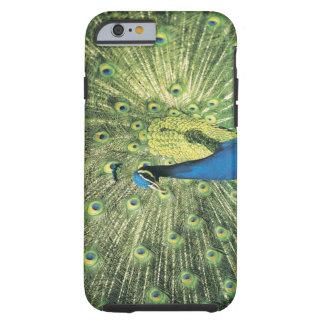 Peacock displaying tough iPhone 6 case