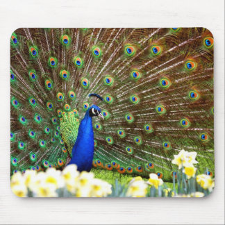 Peacock displays mouse pad