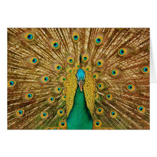 Peacock Dissolved the Tail Greeting Card