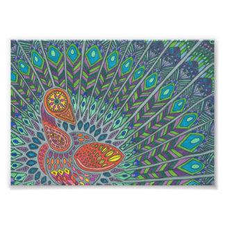 Peacock Drawing Photo