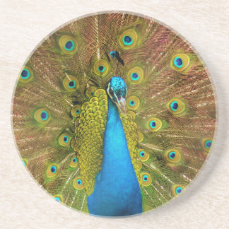 peacock drink coasters