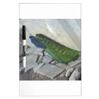 Peacock Dry-Erase Whiteboards