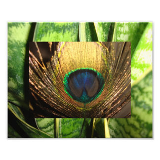 Peacock Eye Photo Print