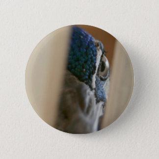 Peacock eye through wooden gate slats button