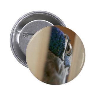 Peacock eye through wooden gate slats 2 inch round button