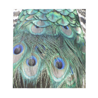 Peacock Eyes And Feathers Notepad