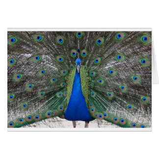 Peacock Eyes Card