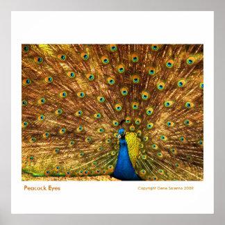 Peacock Eyes Poster