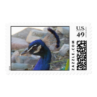Peacock Face - American Southwest Postage