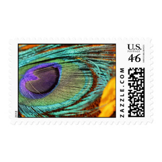 Peacock feather against flower postage